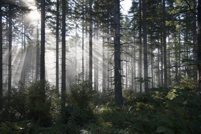 Iniciatívu My sme les podporili desiatky vedcov a ekologických odborníkov
