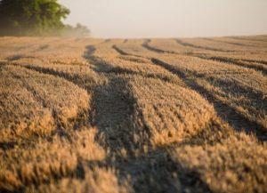 Farmári zasiahnutí suchom neboli odškodnení, agrárna komora napísala Pellegrinimu list
