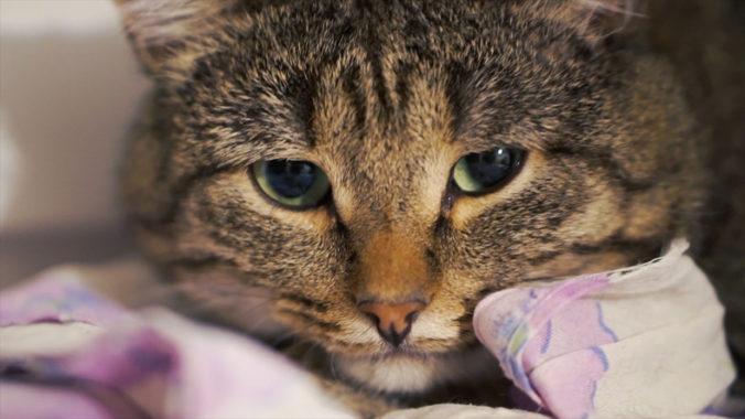 V americkom útulku usmrcovali mačiatka zmrazovaním bez ich uspatia