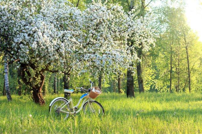 Obnovený sad v Brezne je tento rok najlepším projektom grantového programu Zelených oáz